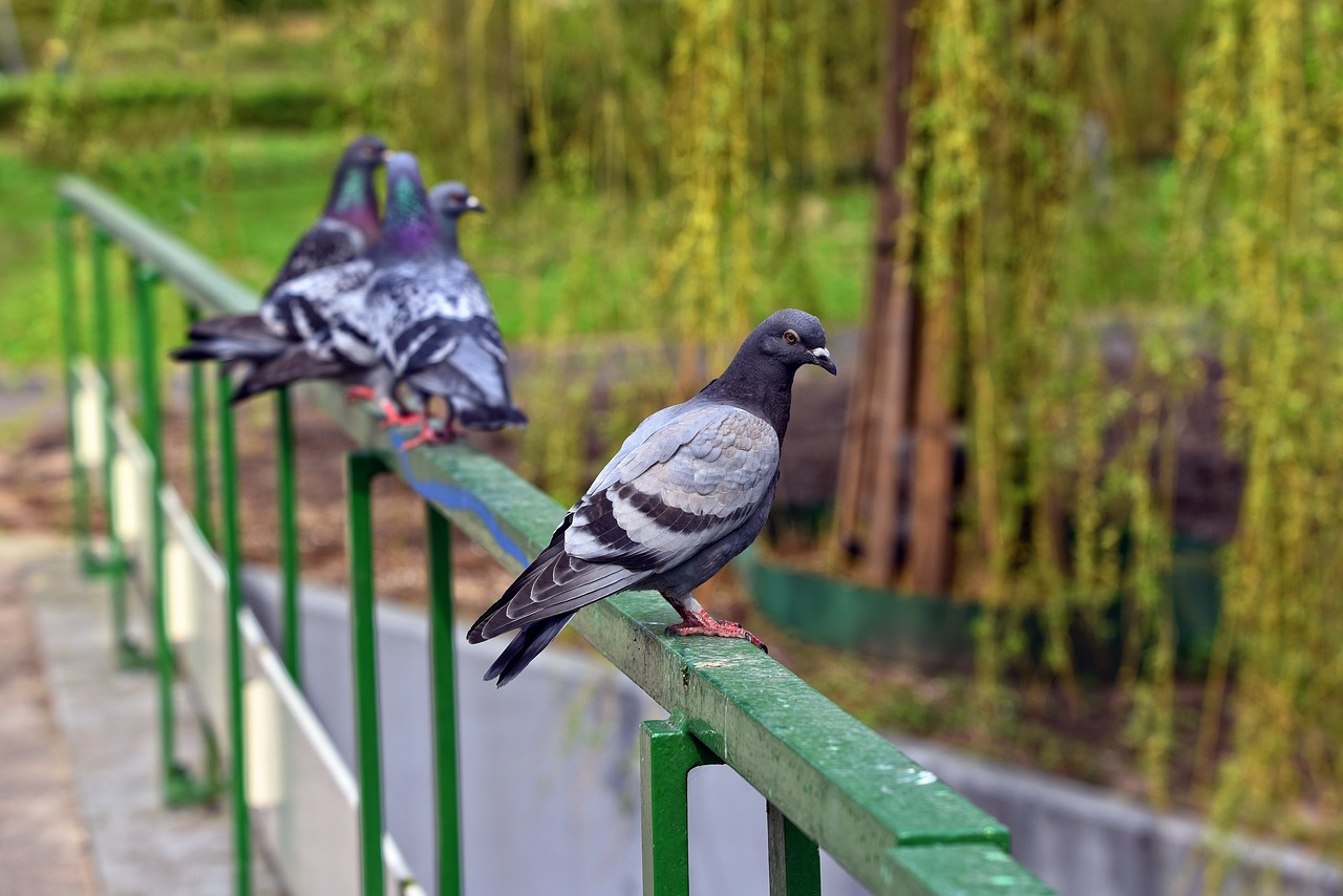 Why Pigeons Don't Go to the Bookstore